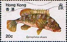 Hong Kong 1981 Fish Red Spotted Grouper Fine Used                    SG 395 Scott 369       Other Asian and British Commonwealth Stamps HERE!