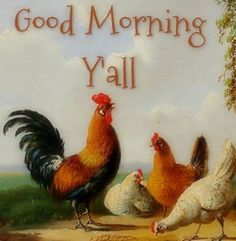 rooster and chickens Good Morning Good Night, Good Morning Quotes, Good Morning Facebook, Chicken Illustration, Eggs For Sale, Chicken Pictures, Chicken Ideas, Blessed Quotes, Chickens And Roosters