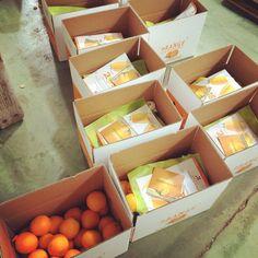 Container, Food, Orange, Fruit, Essen, Meals, Yemek, Eten
