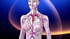Die Reinigung und Entgiftung des Lymphsystems wird Ihnen in kurzer Zeit ein erstaunliches Wohlbefinden schenken. Wie aber reinigt man am besten die Lymphe und das Lymphsystem? Eine ganzheitliche Lymphreinigung ist eine der wichtigsten Massnahmen...