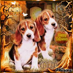 Doggy Good Morning Happy Halloween morning halloween good morning halloween pictures happy halloween halloween gifs halloween quotes good morning quotes good morning halloween good morning images happy halloween good morning Snoopy Halloween, Fröhliches Halloween, Happy Halloween Pictures, Halloween Images, Good Morning Puppy, Happy Snoopy, Beagle Pictures, Friday Dog, Puppies Gif