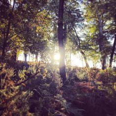 """242 mentions J'aime, 2 commentaires - Christophe Zamprogno  Landes (@czamp40) sur Instagram: """"Les jeux de #lumière dans la #forêt de pins des #Landes de #Gascogne sont fascinants ! ☀️…"""""""