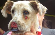 Brutally Abused Dog Needs Your Help- someone cut her nose & lips off! Go here- http://blog.hendrickboards.com/?p=951