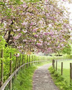 Country Living ~ Footpath to Grasmere, Lake District, England, as seen on Masterpiece PBS Country Life, Country Living, Country Roads, Cumbria, English Countryside, Lake District, Pathways, Beautiful Landscapes, Beautiful Places