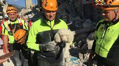 Cão sobrevive após 30 horas soterrado por escombros na Itália - ANDA - Agência…