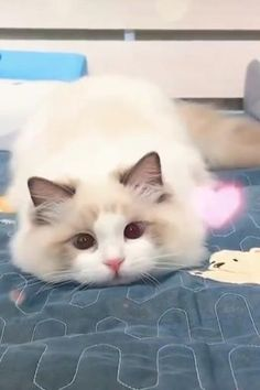 Cute Baby Cats, Cute Little Animals, Cute Funny Animals, Kittens Cutest, Cats And Kittens, Funny Cats, Cute Babies, Baby Animal Videos, Cat And Dog Videos