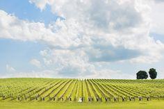 Best Charlottesville Wedding Photographers - Aaron Watson Photography - Virginia Wedding Photography - Specializing in Vineyard & Winery Weddings