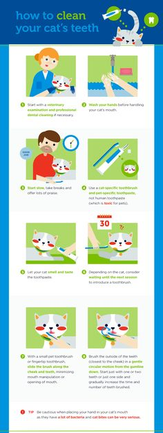 Purr-ly Whites: How to Clean Your Cat's Teeth check this fantastic photo from Katzenworld