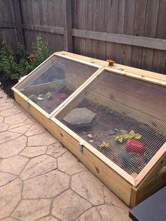 Caged outdoor set up, big. Caged outdoor set up, big. Caged outdoor set up, big. Tortoise Cage, Tortoise House, Tortoise Habitat, Tortoise Turtle, Turtle Enclosure, Reptile Enclosure, Reptile Cage, Turtle Pond, Pet Turtle