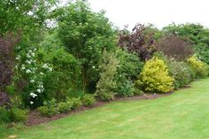 for Colleen - this Mixed hedge is looser then what we are talking about for your yard...