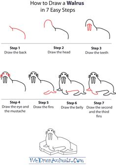how-to-draw-a-walrus-step-by-step