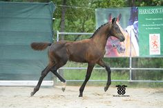 Dutch Warmblood, Warmblood Horses, Dressage Horses For Sale, Lucy Liu, Horse Pictures, Horse Breeds, Deodorant, Jazz, Poses