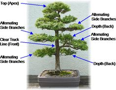 How To Start Bonsai | How to Create Stunning Bonsai Trees at Home Fast
