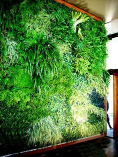 Fytogreen Vertical Gardens and Green Roofs