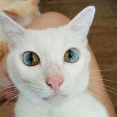 universe eye cat 1