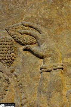https://flic.kr/p/nKHuYk | Mullilu, Wall Reliefs, North West Palace of Ashurnasirpal II | These reliefs demonstrate human-headed and bird-headed Apkallu.  Apkallu means 'sage' in Akkadian. An Apkallu was a protective spirit which protected the king and those in the palace from evil spirits. Apkallu figures are often shown beside doorways and in corners of rooms since these areas were where evil spirits were thought to lurk.   Some Apkallus hold a an  object which is called a 'banduddu'…