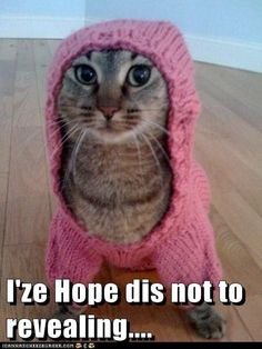 Low Cut Cat..