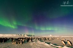 This amazing photo by Stefan Christmann has everything! Penguins and an Aurora.