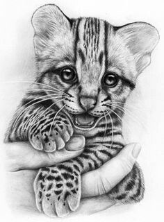 Many beginners try Easy Pencil Drawings Of Animals as animal are one of the most well liked subjects for artists to draw. Many people like to draw animals' Easy Pencil Drawings, Pencil Drawings Of Animals, Amazing Drawings, Animal Sketches, Cool Art Drawings, Art Drawings Sketches, Realistic Animal Drawings, Drawings Of Cats, Hipster Drawings