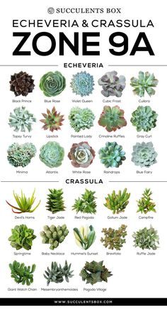 CHOOSING SUCCULENTS FOR ZONE 9 - CALIFORNIA, FLORIDA AND ARIZONA