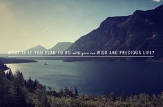 your one wild and precious life...