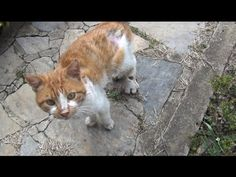 Stray Cat Hobbles Up To Stranger's Home Meowing Loudly To Ask For Help