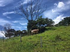 🌿🌱🐂🌳🌤    Paisaje, Landscape, Cielo, Sky, Cow, Vaca, Montañas, Mountains, Naturaleza, Nature