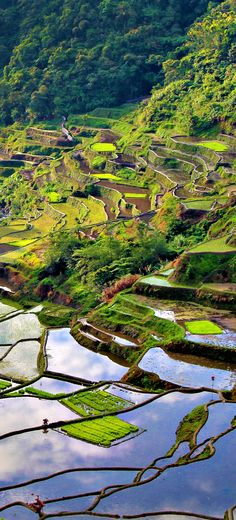 Rice terraces in Banaue (Philippines)