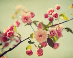 Spring Flower Photography  Romantic Shabby by EyePoetryPhotography, $30.00