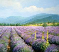 Sea of Lavender in Bulgaria