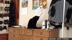 The cat who just does it because he can, and because he is bored:
