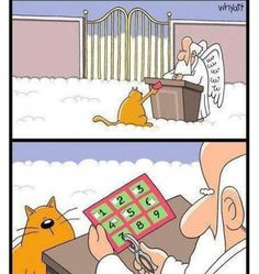 Heaven Isn't Too Far Away - LOLcats is the best place to find and submit funny cat memes and other silly cat materials to share with the world. We find the funny cats that make you LOL so that you don't have to. Funny Shit, Funny Cute, Funny Jokes, Funny Stuff, Kid Jokes, Funny Gifs, Cat Stuff, Videos Funny, Funny Cartoons