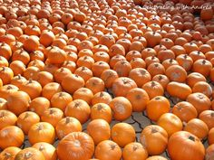 Fall Autumn Inspiration, Pumpkin, Inspire, Fall, Autumn, Pumpkins, Squash