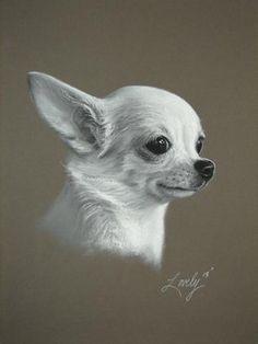 Image result for soft dog portrait