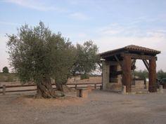 Parc temàtic de l'oli, oct 2011