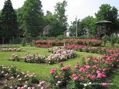 Sonnenberg Gardens - The Rose Garden