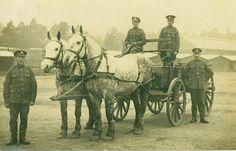 The Real War Horse | Great War Photos