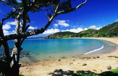 Waiheke Island. Another special time. From the bus ride in  going back babe