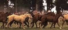 La tropilla de caballos