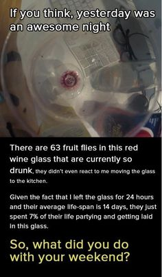 Drunk fruit flies in a wine glass humor