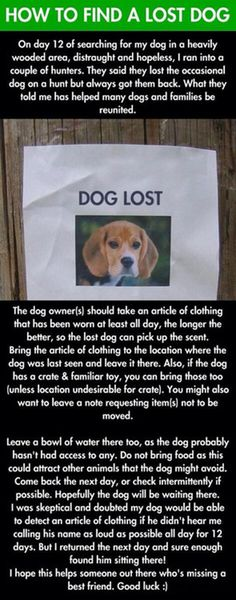 How To Find A Lost Dog - #Dogs, #LostDog, #Pets