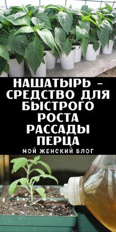 Нашатырь - средство для быстрого роста рассады перца - Мой женский блог Rose Trees, Small Farm, Farm Gardens, Summer Diy, Dream Garden, Gardening Tips, Landscape Design, Food Photography, Healthy Eating