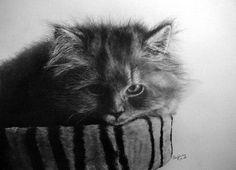 Рисувани котки-невероятен реализъм! - Снимка 7