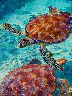 Yo ví tortugas y peces.