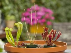 How to Create a Carnivorous Garden