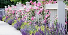 Looking For Easy Landscaping Tips? Garden Shrubs, Shade Garden, Garden Paths, Fence Plants, Garden Pond, Country Landscaping, Front Yard Landscaping, Outdoor Landscaping, Wallpaper Rose