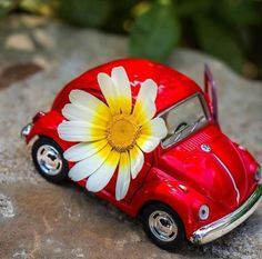Volkswagen, Teddy Bear Pictures, Angel Pictures, Beautiful Roses, Adventure, Drawings, Bb, Animation, Wallpapers