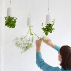 Hanging Upside Down Planters - new in wedding styling
