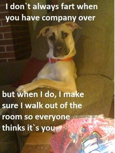 Hahahhaha this ones hilarious! I don't always fart when you have company - funny and serious dog sitting in chair Funny Animal Photos, Funny Pictures, Animal Pics, Dog Pictures, Funny Images, School Pictures, Animal Sayings, Adorable Pictures, Funniest Pictures