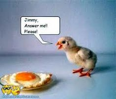 funny chicken pictures